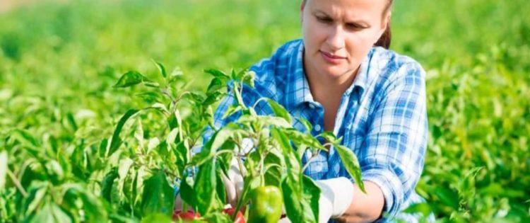 Un premio delle Acli di Trento alle donne in agricoltura